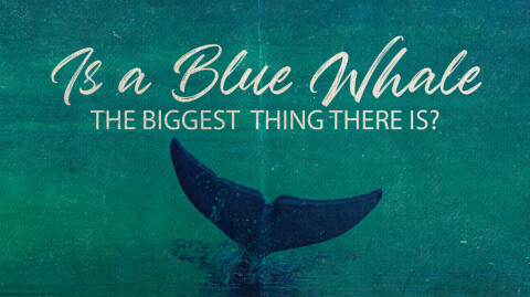 IS A BLUE WHALE THE BIGGEST THING THERE IS?...